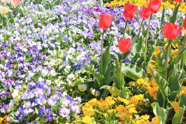 冬春花壇に植替え作業 @ 仙川駅前公園
